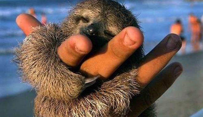 diaforetiko.gr : smallest animals8 Εκπληκτικές Φωτογραφίες: Ζώα μινιατούρες. Και όμως υπάρχουν!