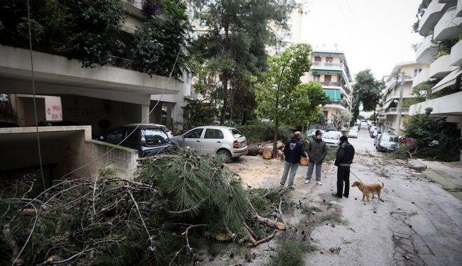 Νεα Σμύρνη καταστροφές σε αυτοκιίνητα απο πτώση δέντρων λογω του δυνατού αέρα.