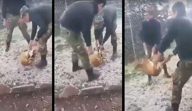 Φαντάροι κακοποιούν σκυλάκι στην Κόνισα