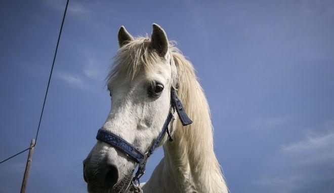 Άλογο σε επαρχιακό δρόμο (φωτογραφία αρχείου)