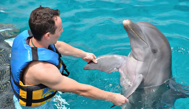 man dancing with dolphin in blue water pool