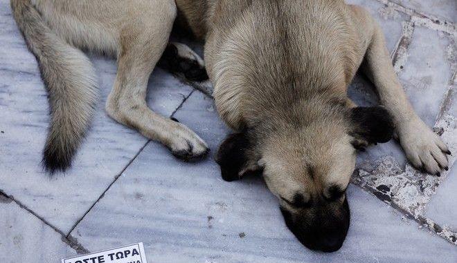 Η κακοποίηση των ζώων στην εκλογική ατζέντα της Κύπρου