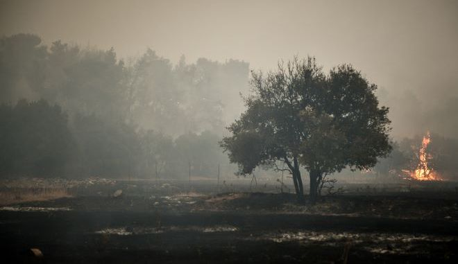 ΣΥΡΙΖΑ: Εξαφανισμένο επιτελικό κράτος στην μεγαλύτερη δασική καταστροφή