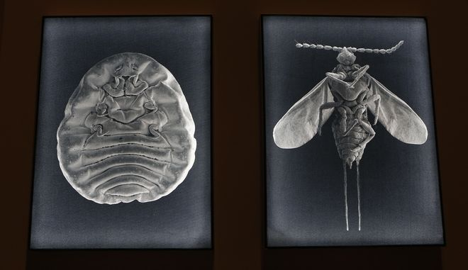 Τρώμε έντομα σε όλη μας τη ζωή