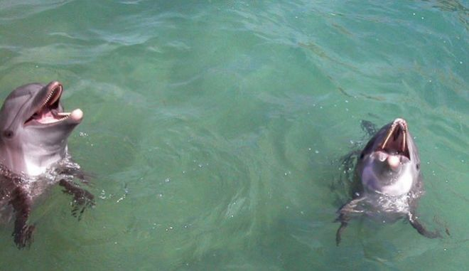 Two tourists swim with two dolphins at the Nizuc Aquatic Park in Cancun, in the Mexican state of Quintana Roo on Thursday, July 17, 2003. The Mexican government said Thursday it planned to allow the Cancun aquatic park to import dolphins from the Solomon Islands, despite complaints from Australia.(AP Photo/Israel Leal)