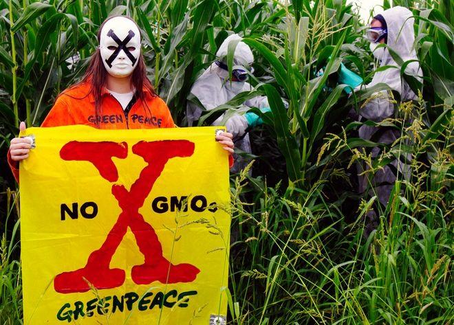 Ακτιβιστές της Greenpeace σε διαμαρτυρία για τα μεταλλαγμένα τρόφιμα