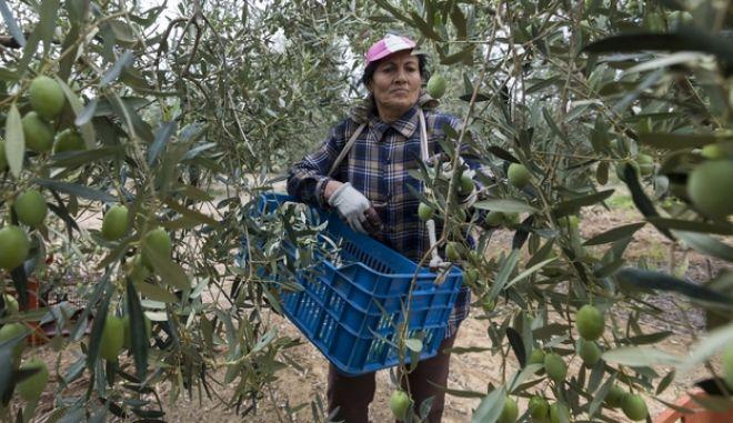 Αγρότισσα επί το έργον
