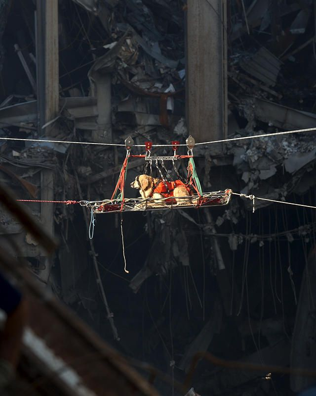 A rescue dog is transported out of the debris of the twin towers of the World Trade Center Saturday, Sept. 15, 2001. (AP Photo/U.S. Navy, Journalist 1st Class Preston Keres)   Original Filename: TERRORIST_ATTACKS_NY128.jpg