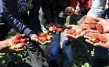 Kάμπινγκ… εργατών γης στη Μανωλάδα Ηλείας