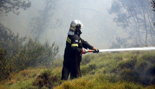 Πυρκαγια σε δασική έκταση