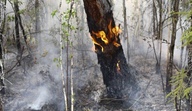 Μαίνονται οι πυρκαγιές στη Σιβηρία.
