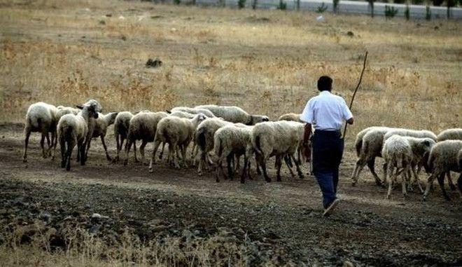 Αποζημιώσεις 5,5 εκατ. ευρώ σε κτηνοτρόφους