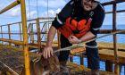Τυχερό κουτάβι υιοθετήθηκε από εργάτη που το βρήκε να κολυμπά 135 μίλια από την ακτή