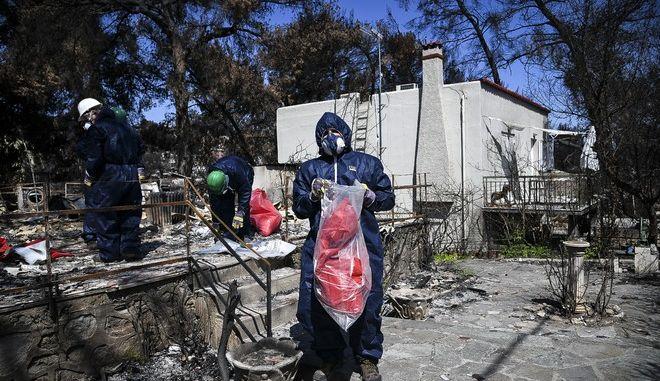 Μέλη συνεργείων με ειδικές στολές κάνουν αποψίλωση και απομακρύνουν καμμένα ελενίτ και καμινάδες που αποτελούν εστία αμίαντου, από κατεστραμμένα κτήρια στο Μάτι Αττικής