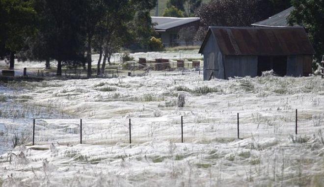 Βρέχει αράχνες. Χωράφια καλύφθηκαν από ιστούς