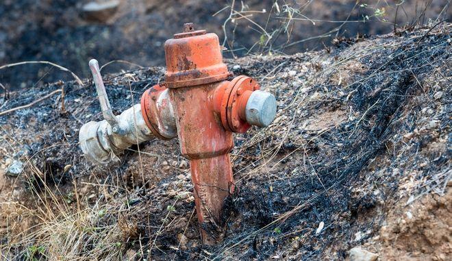 Φωτογραφία από την πυρκαγιά από το χωριό Κοντοδεσπότι Ευβοίας