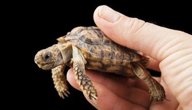 diaforetiko.gr : smallest animals7 Εκπληκτικές Φωτογραφίες: Ζώα μινιατούρες. Και όμως υπάρχουν!