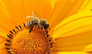 Μια μέλισσα ίσως σταματήσει την παγκόσμια εξάρτηση από τα πλαστικά