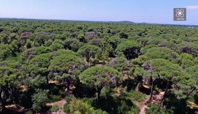 Το μαγευτικό δάσος όπου 'γεννιούνται' οι ελληνικές φράουλες