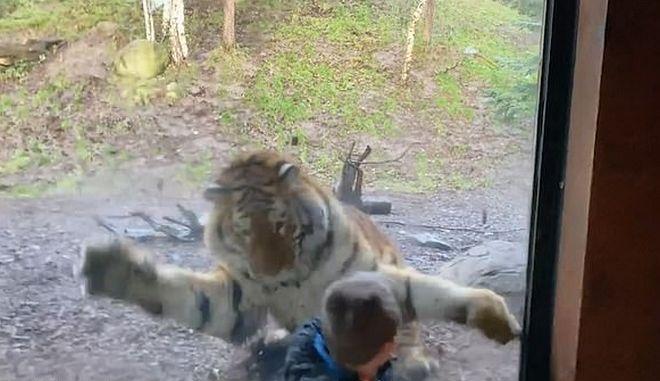 Η στιγμή που η τίγρης επιτίθεται στο παιδί