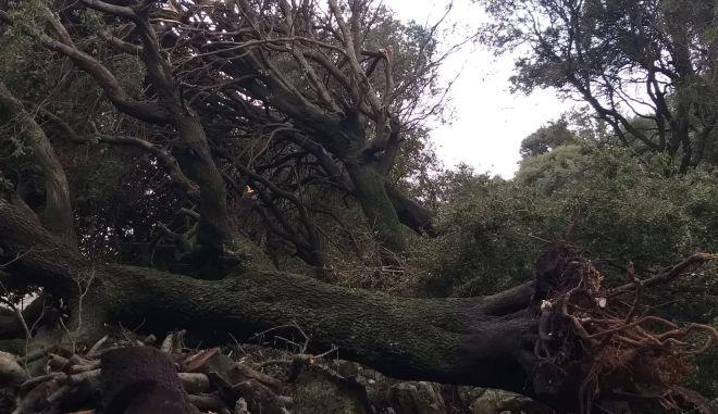 Στο έλεος της κακοκαιρίας η Κέρκυρα: Πλημμύρες, καταστροφές και προβλήματα στην ηλεκτροδότηση