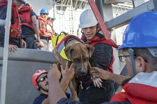 In this Wednesday, Oct. 25, 2017 photo, USS Ashland sailors help Zeus, one of two dogs who were accompanying two Honolulu women who were rescued after being lost at sea for several months while trying to sail from Hawaii to Tahiti. The U.S. Navy rescued the women on Wednesday after a Taiwanese fishing vessel spotted them about 900 miles southeast of Japan on Tuesday and alerted the U.S. Coast Guard. The women, identified by the Navy as Jennifer Appel and Tasha Fuiaba, lost their engine in bad weather in late May, but believed they could still reach Tahiti. (Mass Communication Specialist 3rd Class Jonathan Clay/U.S. Navy via AP)