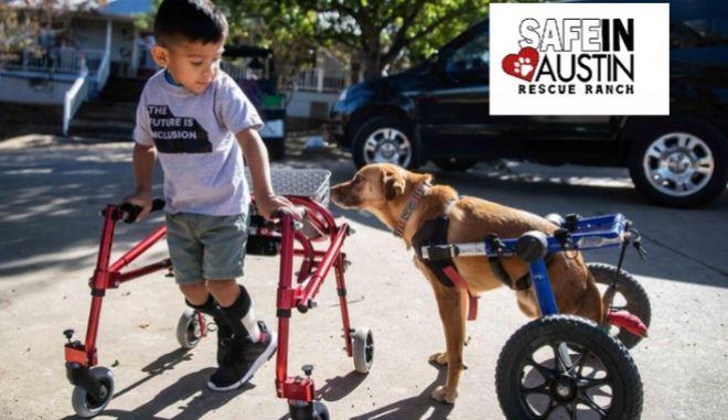 Παιδιά και ζωάκια με ειδικές ανάγκες ζούνε μαζί την διαδικασία αποκατάστασης