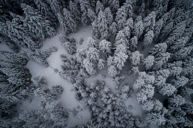 Στα λευκά το δάσος στο Περτούλι