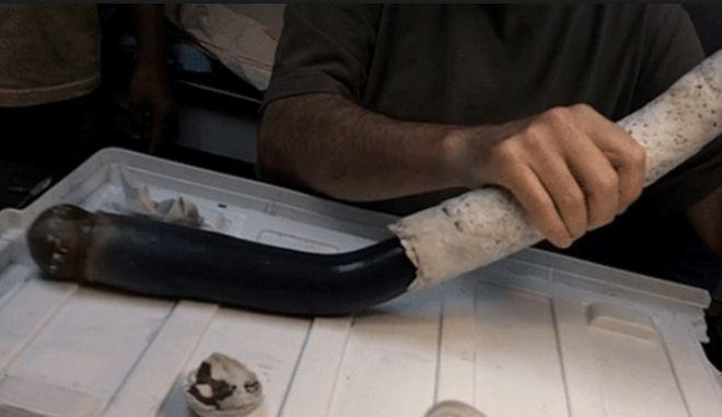 Για πρώτη φορά στο φως: Θαλάσσιο σκουλήκι 1,5 μέτρου που ζει σε κέλυφος