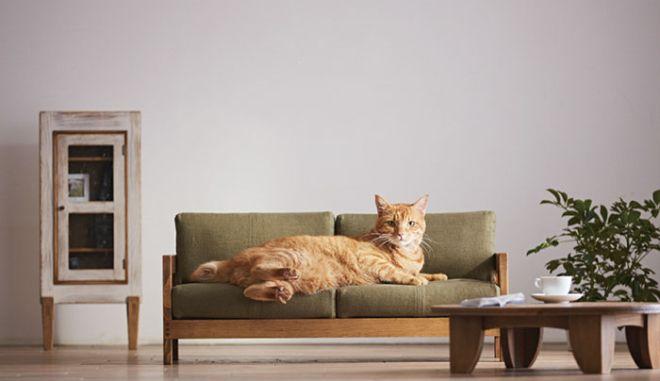 Η νέα μόδα επιβάλλει έπιπλα αποκλειστικά για γάτες