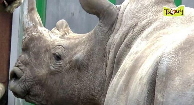 Σκότωσαν ρινόκερο σε ζωολογικό κήπο και έκοψαν το κέρατό του με πριόνι