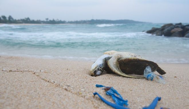 Νεκρή θαλάσσια χελώνα στην άμμο