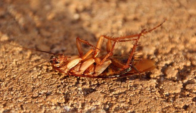 Κατσαρίδα μπήκε στο αυτί γυναίκας