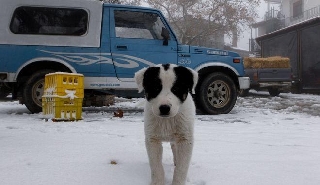 Χιόνια (ΦΩΤΟ Αρχείου)