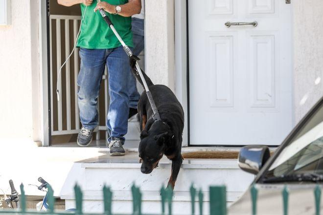 Σκυλί επιτέθηκε και σκότωσε βρέφος στα Γλυκά Νερά