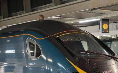 Στο λογαριασμό του σταθμού London Euston στο Twitter υπήρχε ενημέρωση για την καθυστέρηση δρομολογίου και φωτογραφία που έδειχνε το λόγο.