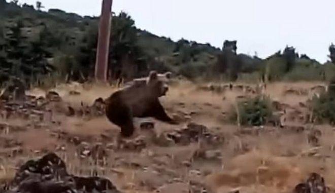 Καστοριά: Έβγαλε βόλτα το σκύλο και έπεσε πάνω σε αρκούδες