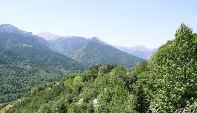 Δασική περιοχή