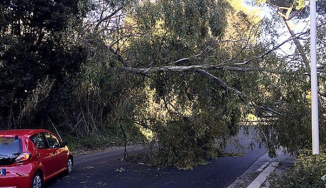 Πεσμένο δέντρο στη Ρώμη