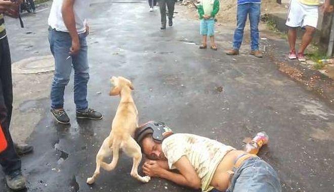 Αυτό θα πει πιστός σκύλος: Δεν αφήνει κανένα να ξυπνήσει τον μεθυσμένο ιδιοκτήτη του