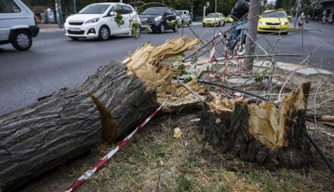 Σπασμένο δέντρο από τον δυνατό αέρα στη Λεωφόρο Αλεξάνδρας στην Αθήνα