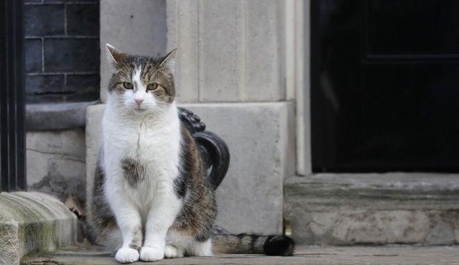 Γάτα στο Λονδίνο