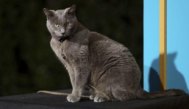Μία γάτα υποψήφια στις δημοτικές εκλογές της Γαλλίας