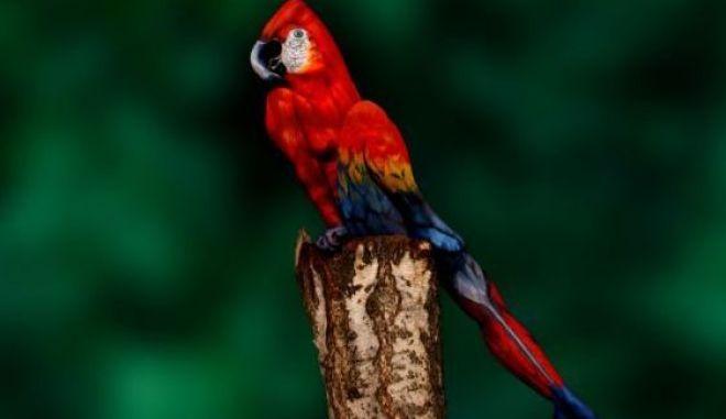 Τεστ παρατηρητικότητας! Είσαι σίγουρος πως βλέπεις έναν παπαγάλο;