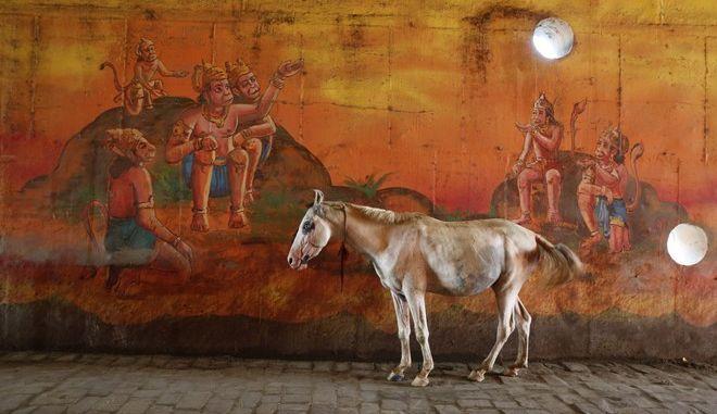 Ένας γάιδαρος, Ινδία
