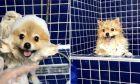 Το σκυλάκι Shila