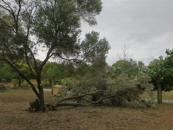 Πτώση δέντρων και μικρές ζημιές στο Κέντρο Βυζαντινού Πολιτισμού