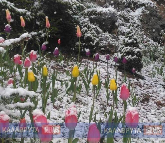 Χειμώνας μέσα στην Άνοιξη: Χιόνισε στα Καλάβρυτα