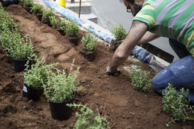 Πώς να διαλέξεις τα κατάλληλα φυτά για τον κήπο σου