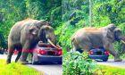Ελέφαντας ανέβηκε πάνω σε αμάξι στην Ταϊλάνδη